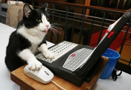 cat-click